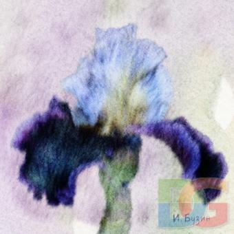 Синий ирис